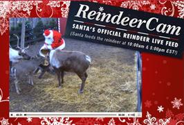 Reindeer Cam FREE Live Camera Feed of Santas Reindeer