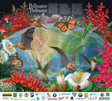 Pollinator-Pathways-Pollinator-Poster-2012