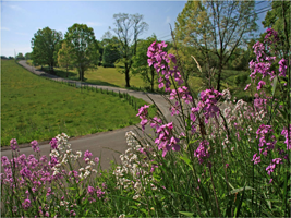 2014-Roadsides-in-Bloom-Calendar