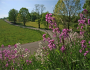Roadsides in Bloom Calendar