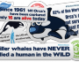 Orca-whales-Stickers