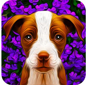 Dogistry App