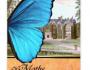 Of Moths and Butterflies1