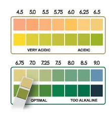 pH Testing Kit