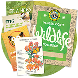 Butterfly-Garden-Starter-Packet