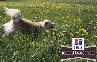 Hill's Pet Nutrition Prize Packages Sweepstakes (1,000