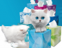 Scotties Facial Tissue Prize Pack Giveaway