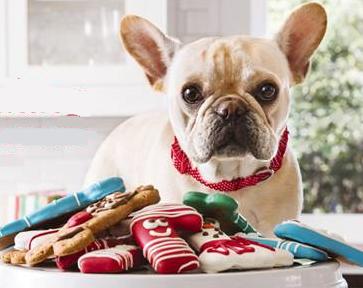 stocking-stuffer-treat-bag-at-petsmart