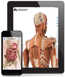 FREE Pocket Anatomy iTunes App (Regularly $14.99) - Hunt4Freebies