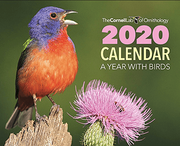Cornell Calendar 2020 FREE 2020 Cornell Lab A Year with Birds Calendar   Hunt4Freebies